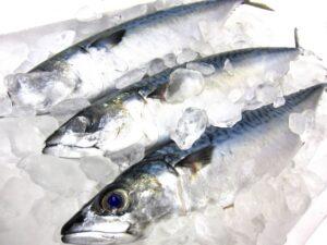 新鮮な青魚